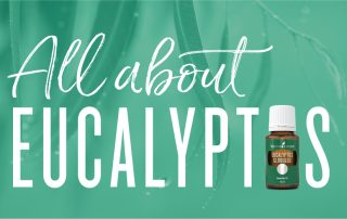 All about Eucalyptus essential Oil