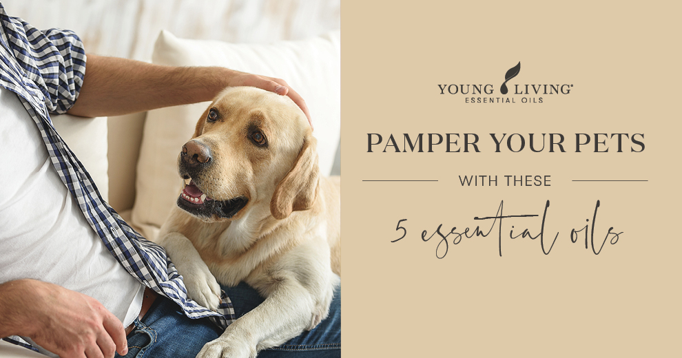 Pamper your pets with these 5 diluted essential oils Header