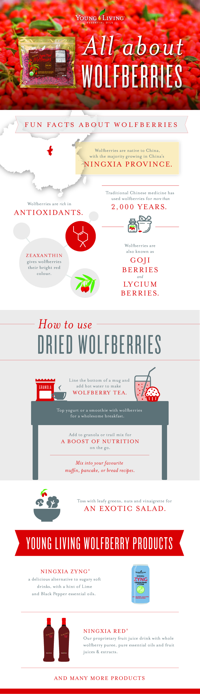 How to use Goji Berries / wolfberries infographic
