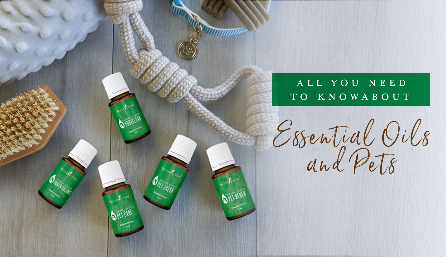 Essential Oils For Dogs Pawsome Tips For Your Furry Friend Young Living Blog