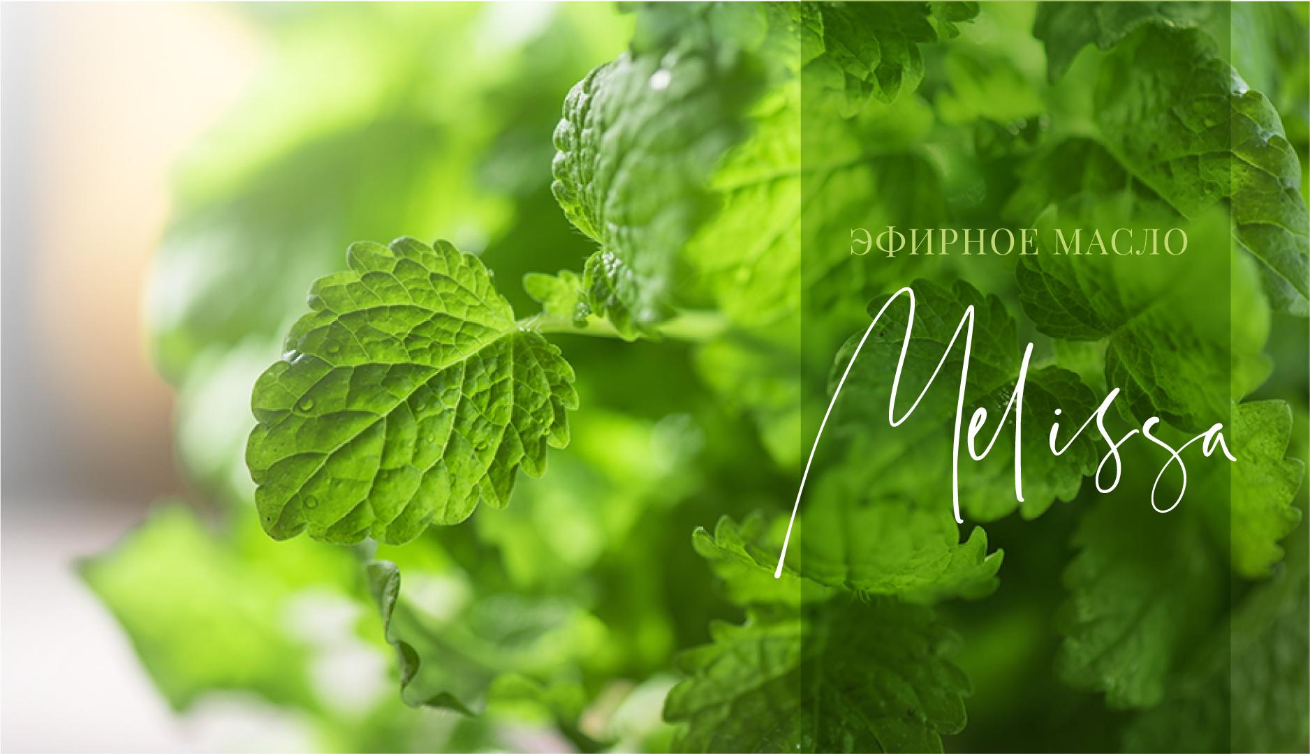 Melissa essential oil - это роскошное масло для разнообразного применения. Оно поддерживает здоровье кожи, хорошее самочувствие и имеет множество других преимуществ. Ознакомьтесь с данной статьей и узнайте больше!