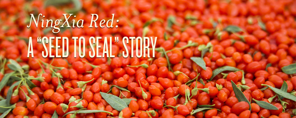 Ningxia Red A Seed To Seal Story Young Living Blog