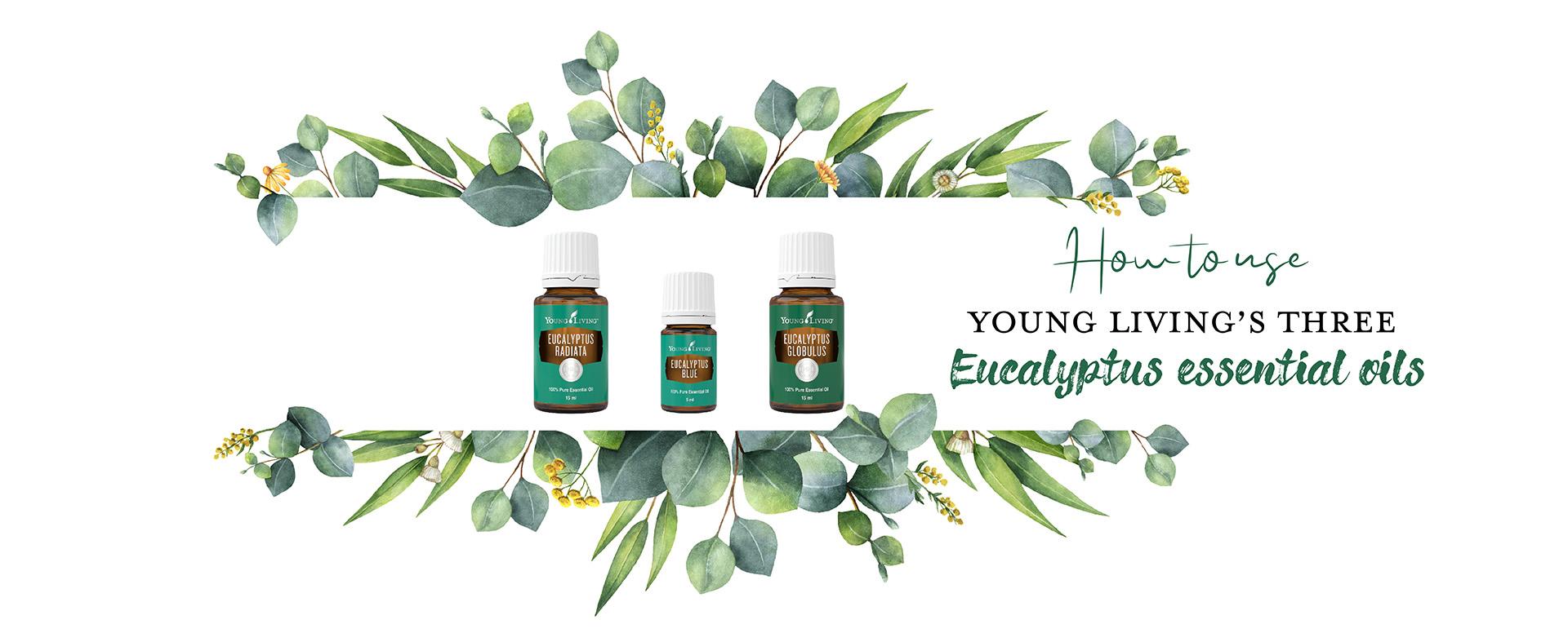 eucalyptus essential oil eucalyptus