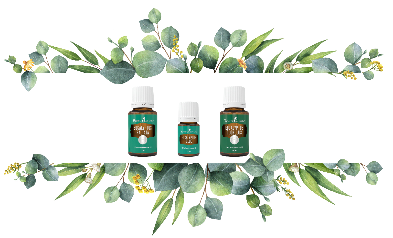How to Use Young Living's Three Eucalyptus Essential Oil