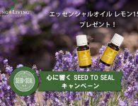 seedtosealpromotousen