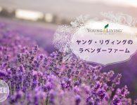 lavenderfarm