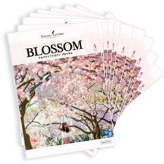 blossom_sale240