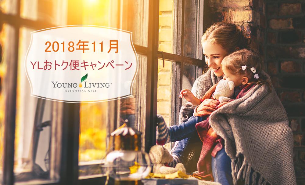 11月のYLおトク便限定キャンペーン