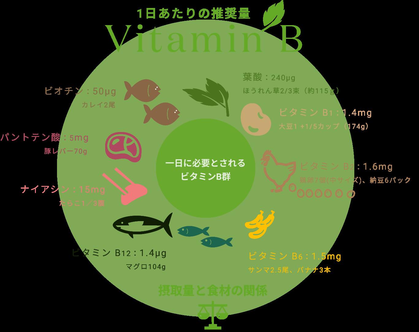 表:一日に必要とされるビタミンB群の摂取量と食材の関係