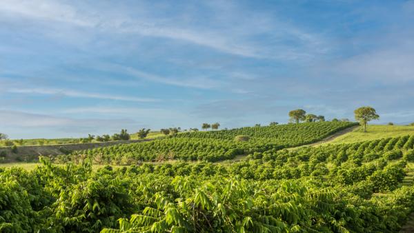 """この農場は""""フィンカボタニカ""""と呼ばれ、これはスペイン語で『植物大農場』を意味します。"""