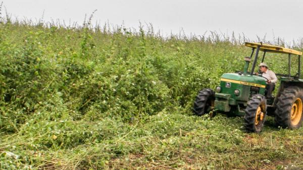 2006年、彼はチョンゴンに土地を購入し、自ら開拓、数々の新しい植物を発見し、新しいエッセンシャルオイルの抽出に成功しました。