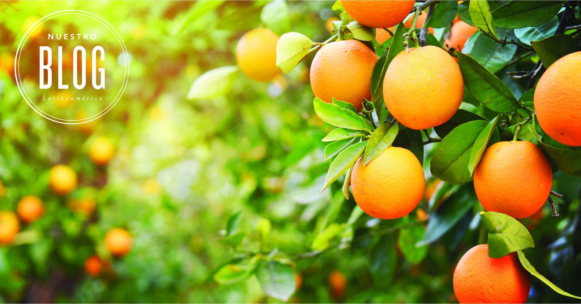 12 maneras de usar tu aceite esencial de Naranja