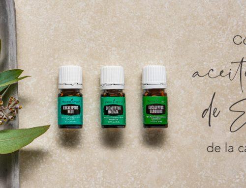 Cómo usar aceite esencial Eucalipto de la cabeza a los pies