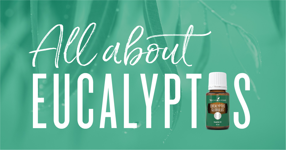 All about eucalyptus oil young living