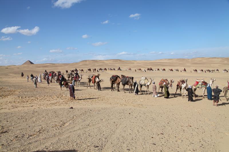 Luxury Camel Caravan Camel Caravan Transporting Salt From The Desert Berhale