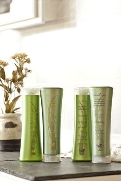 Young Living Signature Hair Care Launch