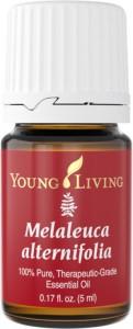Melaleuca Alternifolia | Young Living Tea Tree Oil