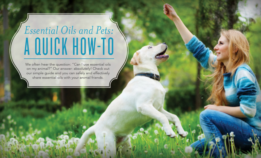 Young Living Blog Animal Scents Ointment