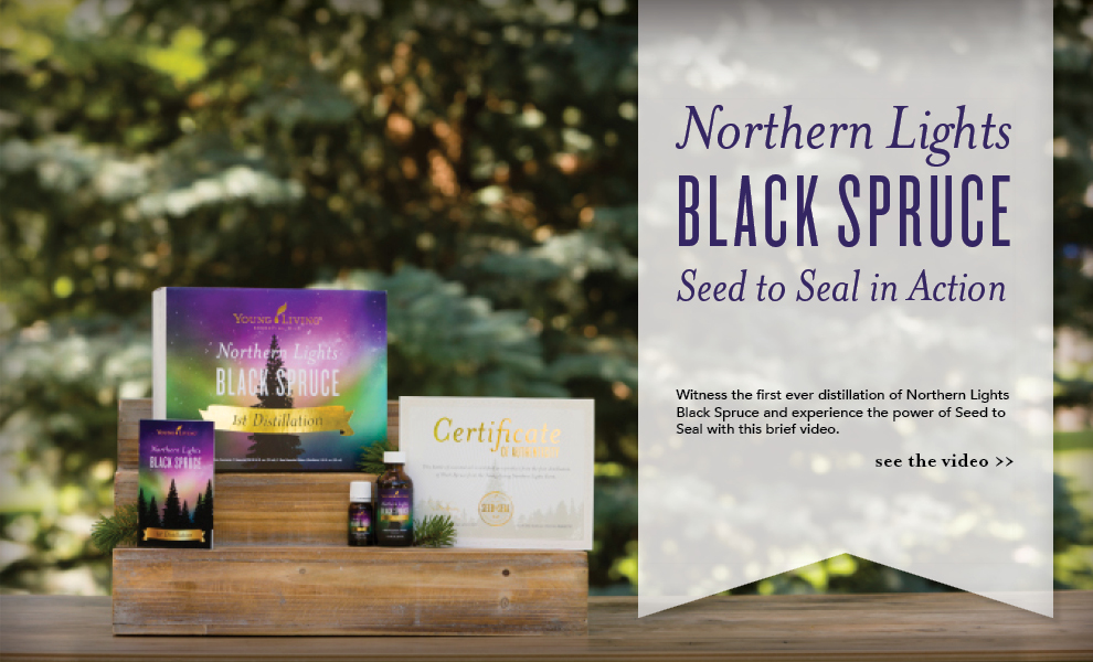 Black Spruce Essential Oil - Young Living