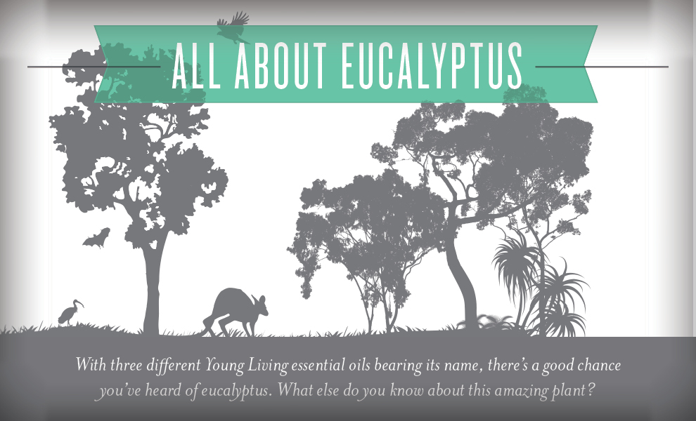 All about Eucalyptus