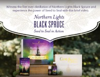 Northern Lights Black Spruce Essential Oil - Young Living