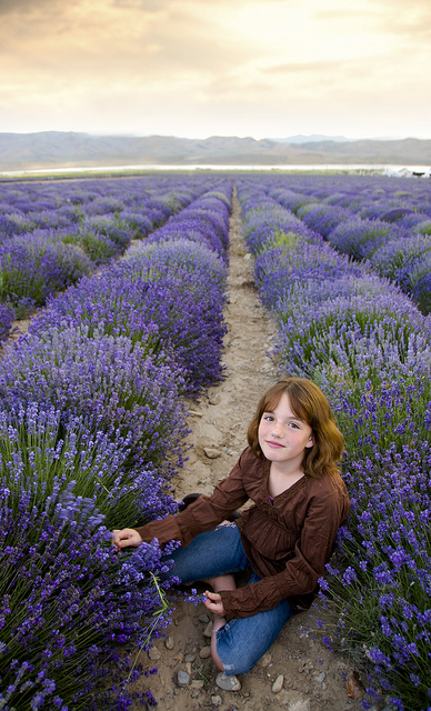 Child in Young Living Lavender Farm
