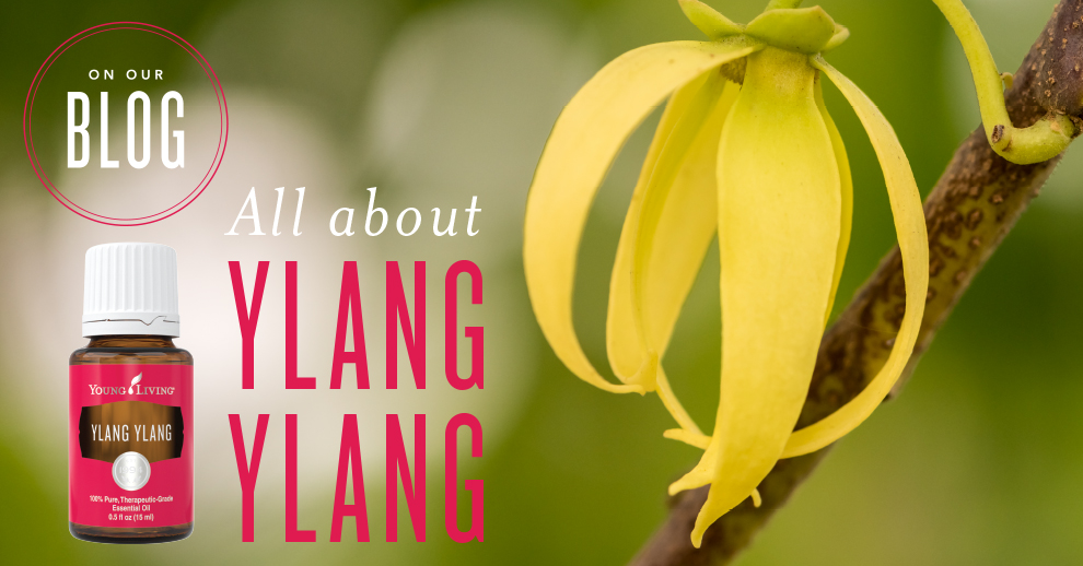 All about Ylang Ylang essential oil | Young Living