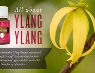Ylang Ylang Infographic