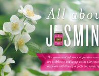 All About Jasmine Header