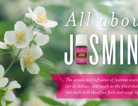 All About Jasmine Header
