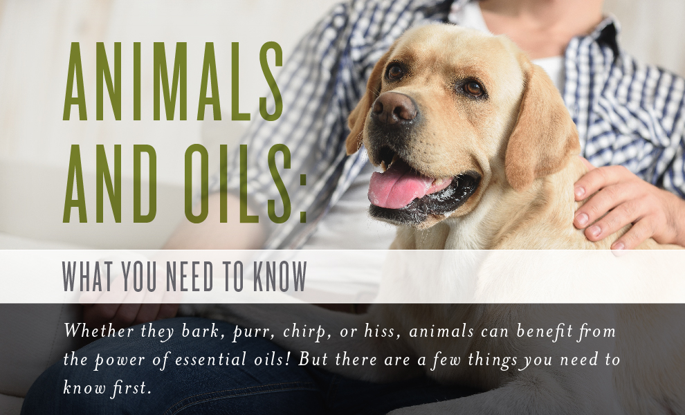 Pets and Animals Infographic Header