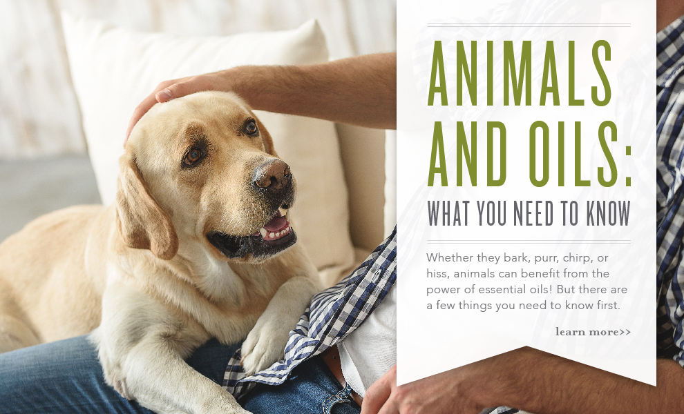 Pets and Animals Infographic Slider