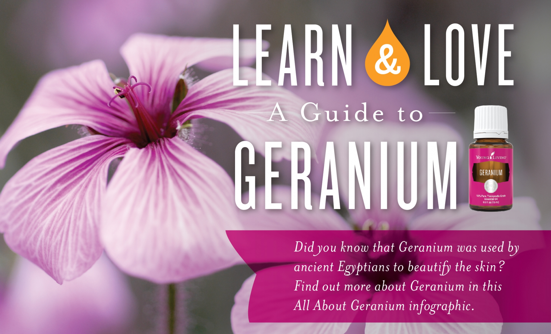 A Guide To Geranium Oily Intel
