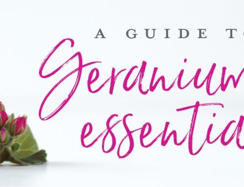 A Guide to Geranium essential oil