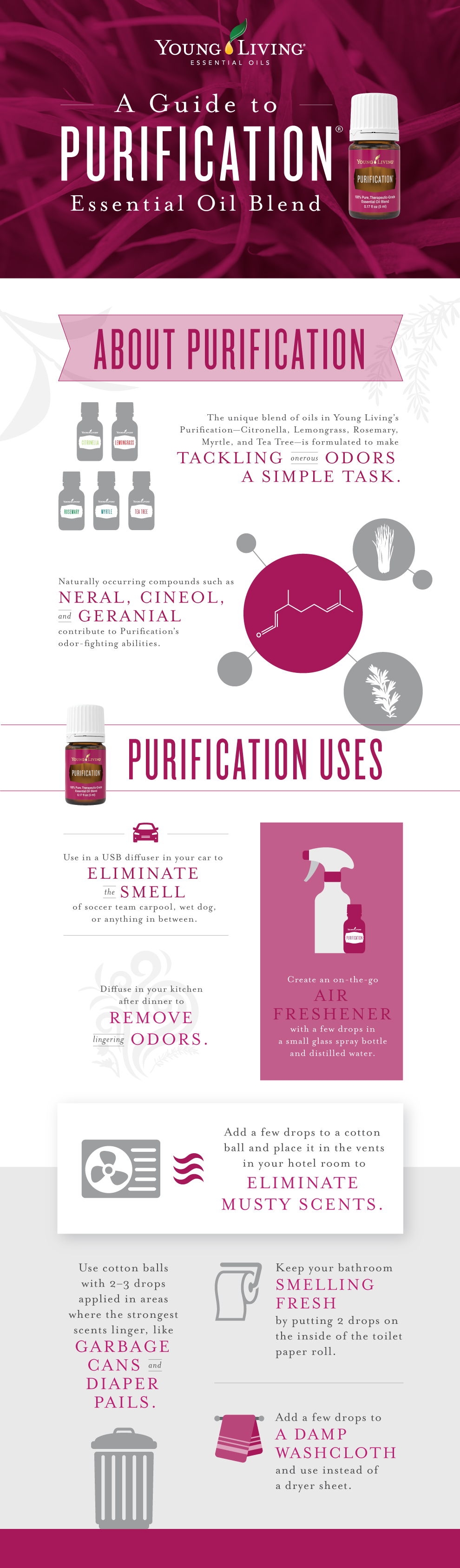 A guide to Purification infographic