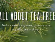 All About Tea Tree Essential Oil