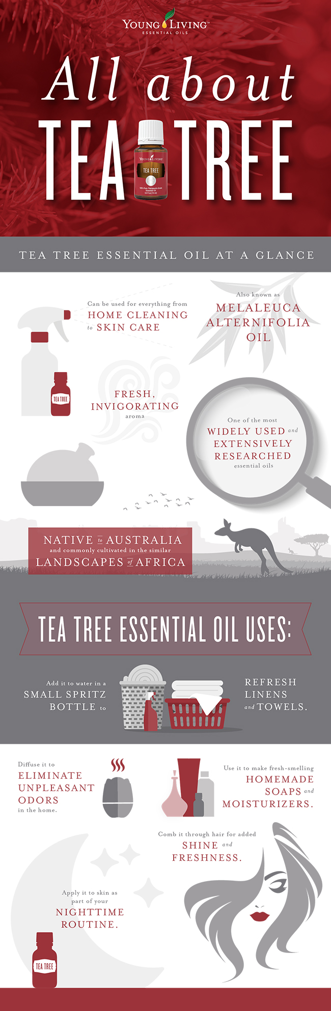 All about Tea Tree essential oil infographic