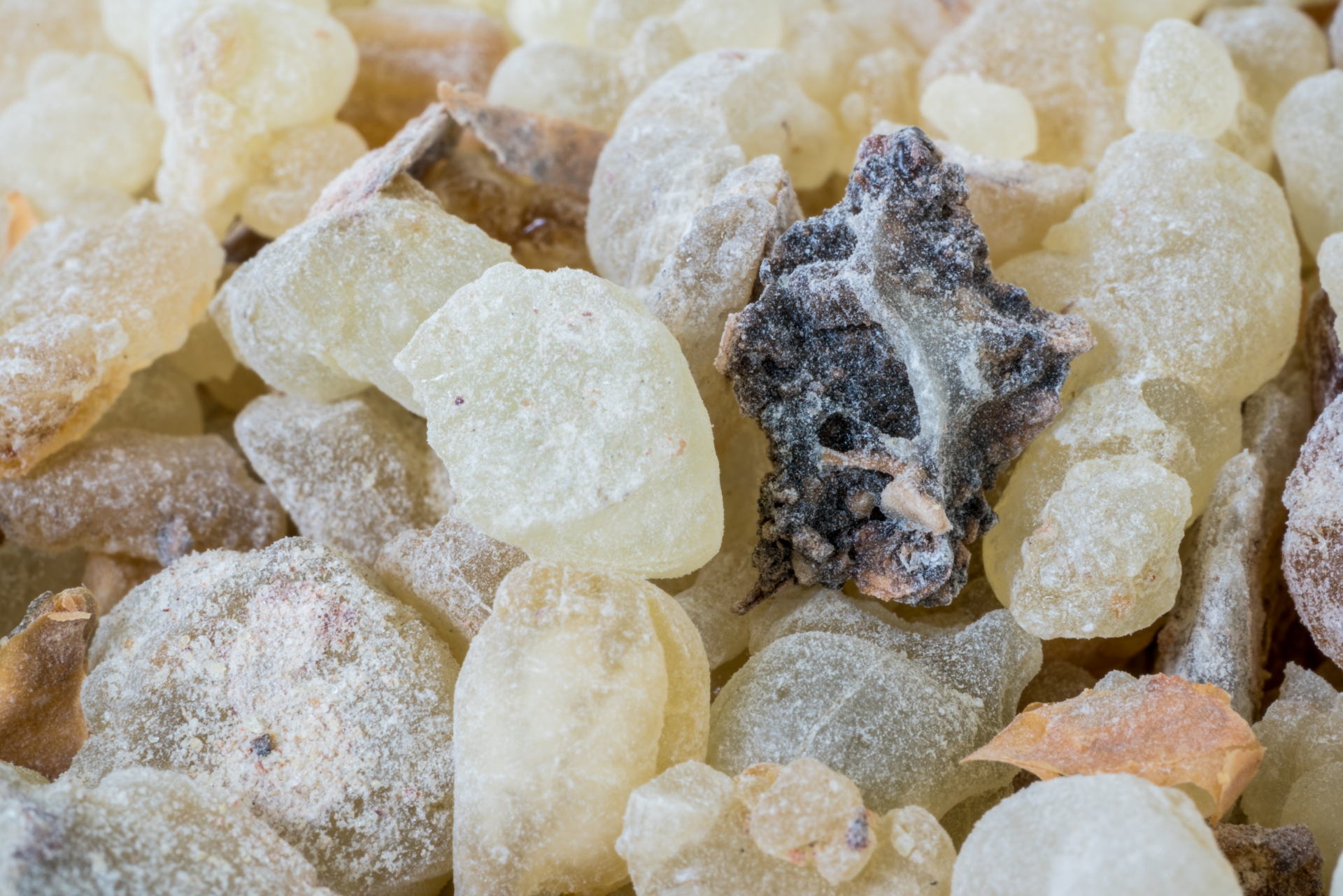 Frankincense Resin from the Young Living Farm in Oman