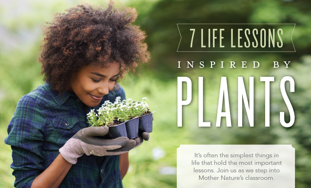 Lessons we can learn from plants