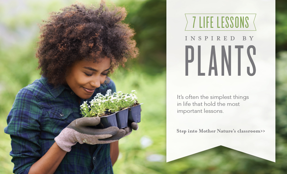 Lessons we learn from plants Young Living