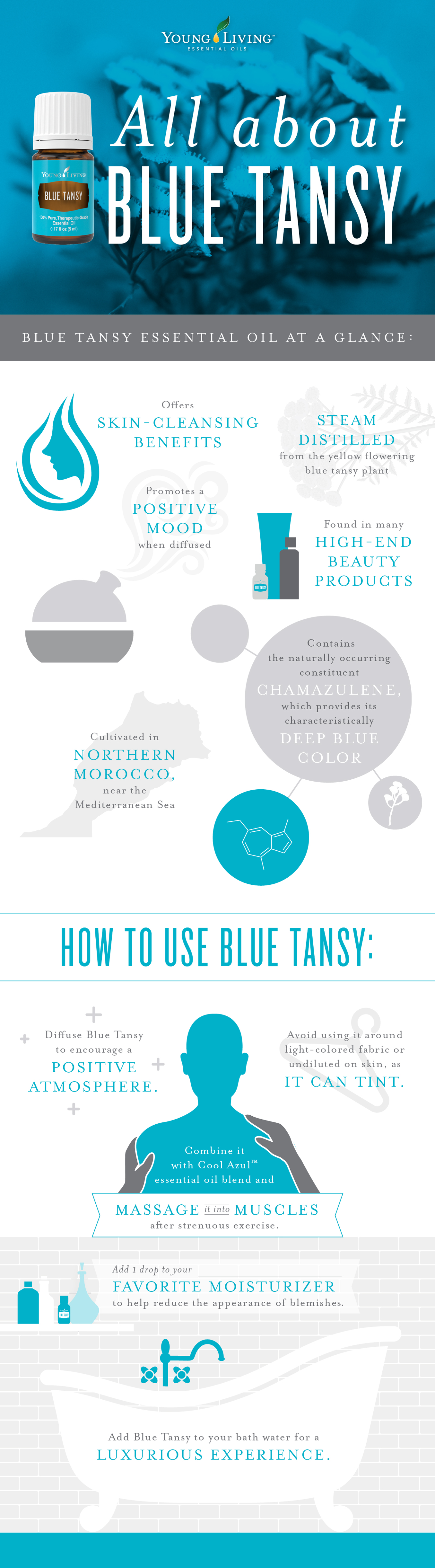 Blue Tansy essential oil benefits and uses