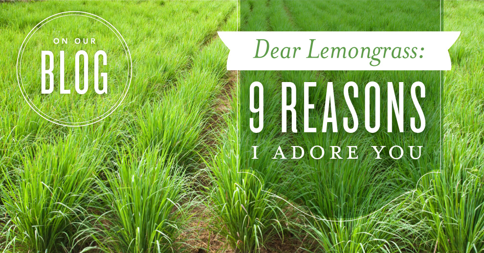 Dear Lemongrass: 9 reasons I adore you