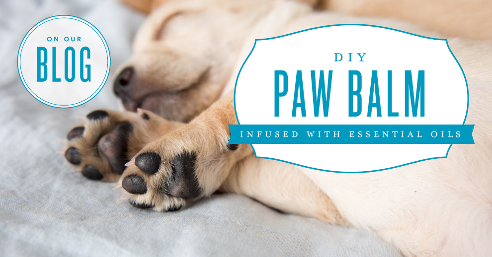 DIY paw balm with essential oils for pets