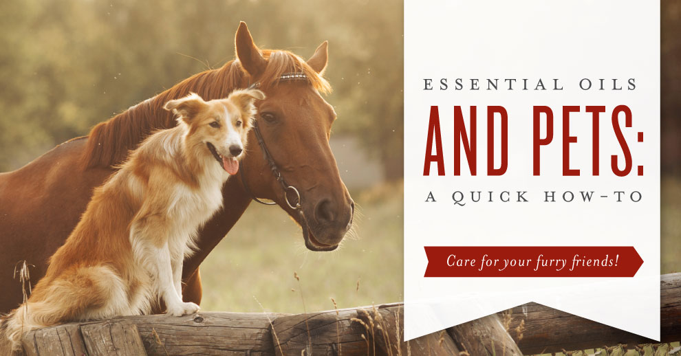 Essential oils and pets: A quick how to