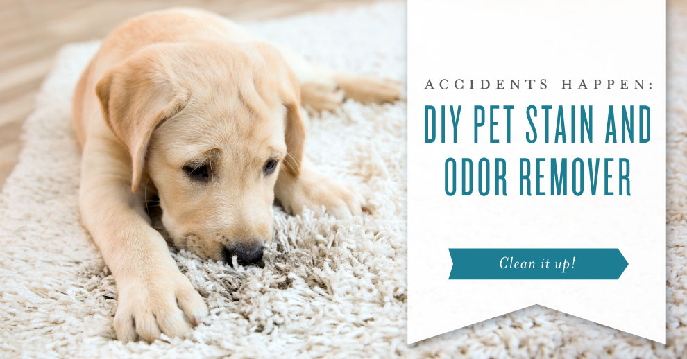 Accidents happen: DIY pet stain and odor remover infused with essential oils