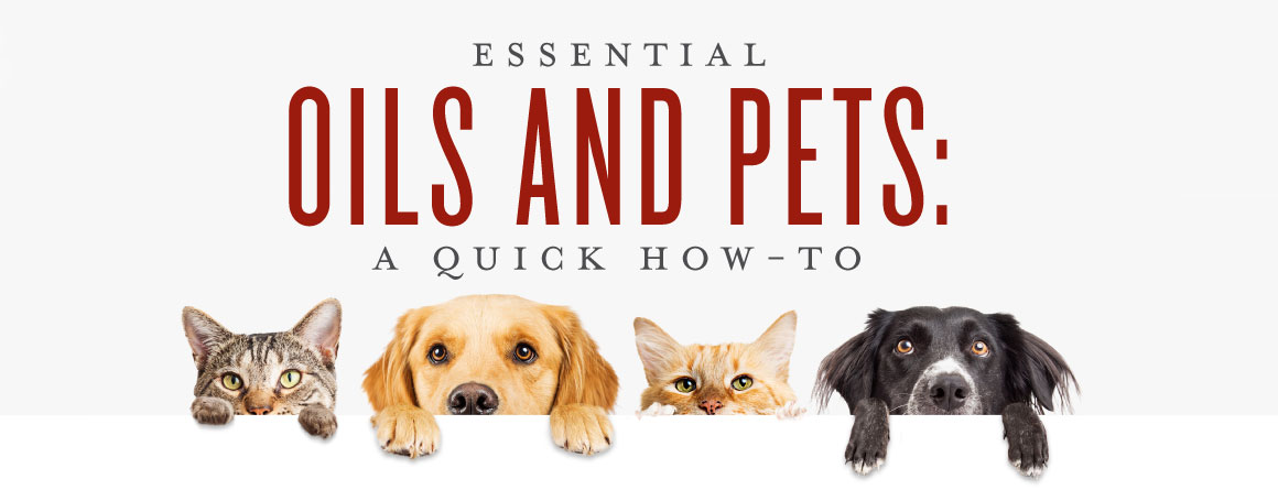 Essential Oils For Pets Uses