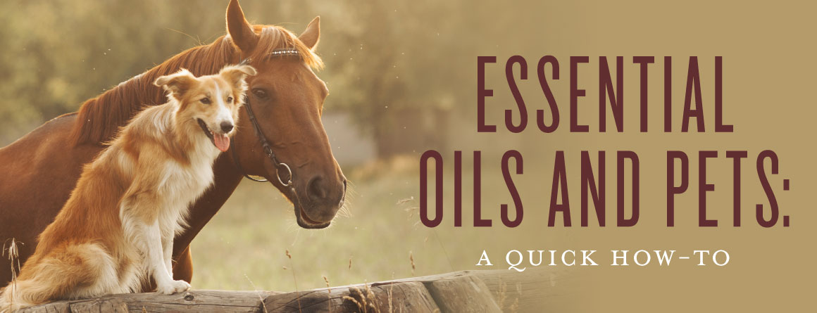 essential oils and pets safety