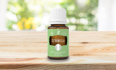 Citronella: 4 reasons why it's summer's sidekick