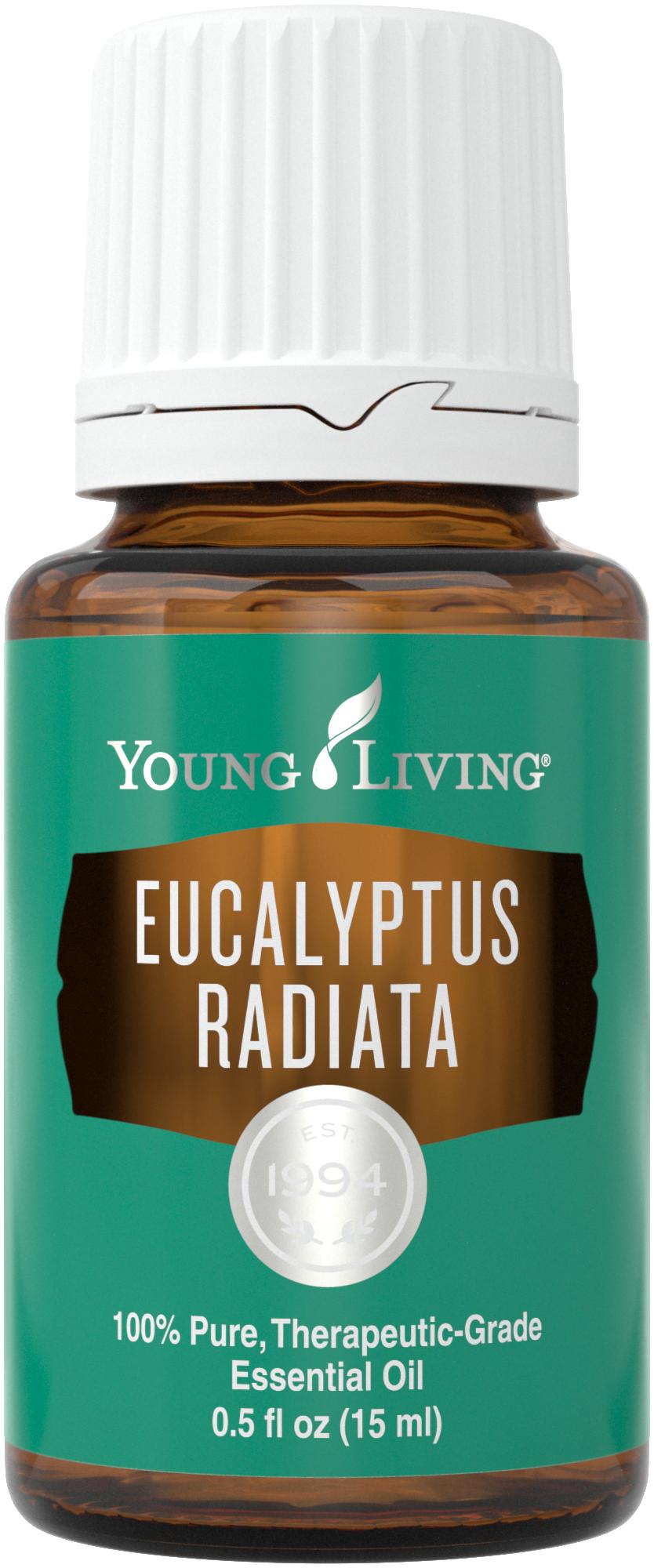 Penggunaan minyak esensial Eucalyptus Radiata | Young Living