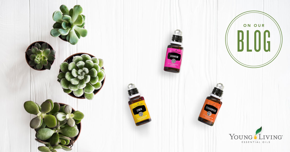 Roll With Me How To Make 5 Diy Roll Ons Young Living Blog